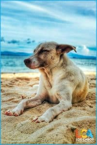 Los Cabos Airport Pet Travel